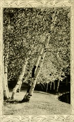 """Image from page 129 of """"Down the year"""" (1914)"""