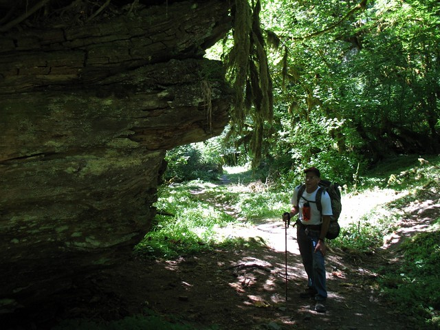 Standing By A Huge Fallen Tree