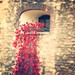 Tower of London Poppies. As though blood were spilling out....