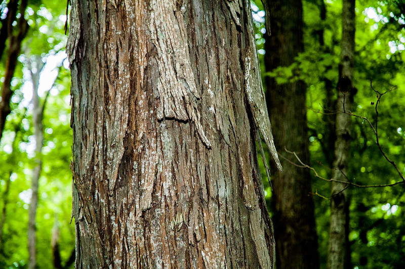 Brookville Lake - Hornbeam Nature Preserve - Whitewater State Park