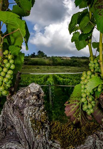 summer france landscape vineyard nikon wine burgundy tokina grapes frankrijk bourgogne landschap 2014 druiven 1116 auxeyduresses d7000 davidjonck zomerklimtreffen