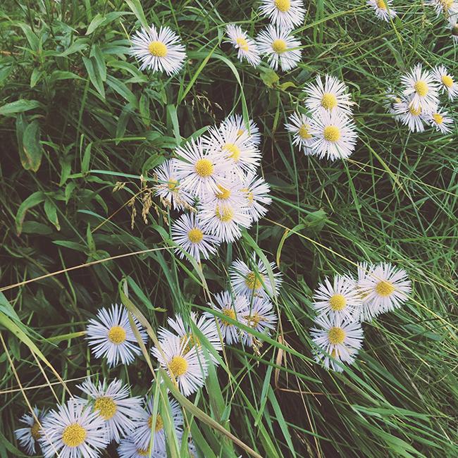 kukat