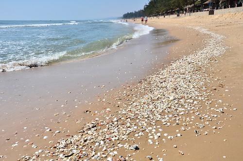 Tien Thanh Beach