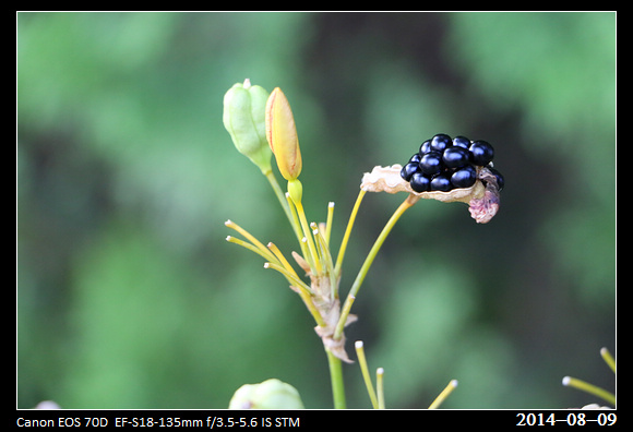 20140809_Seeds