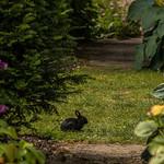 Plas Brondanw Gardens, Snowdonia (3)