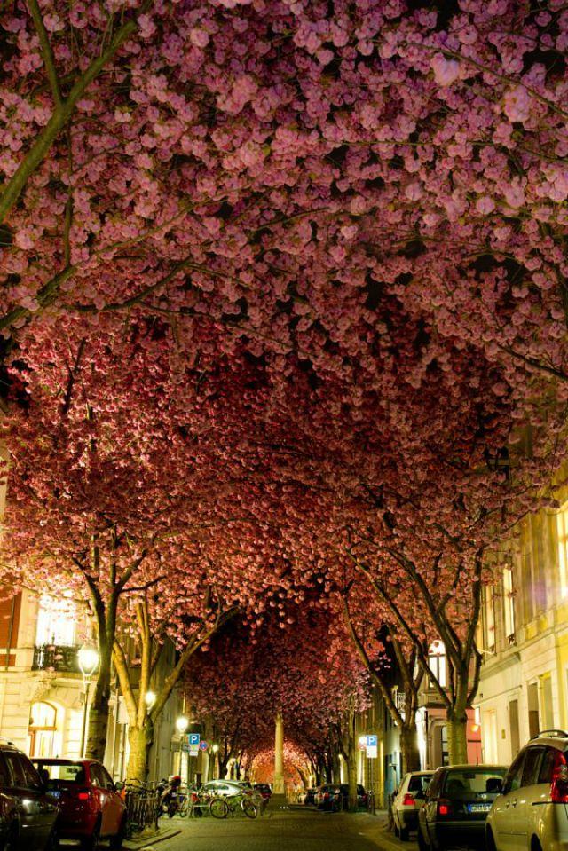 1_amazing-trees-8.jpg