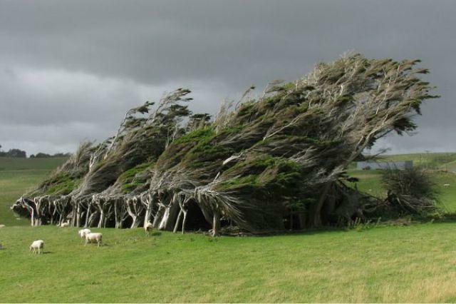 1_amazing-trees-4.jpg