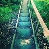 The staircase to adventure #UP #nature #trails