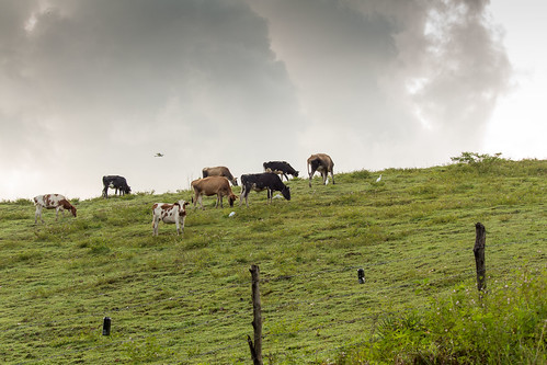 nature landscape wildlife trinidad caribbean savannah grassland westindies