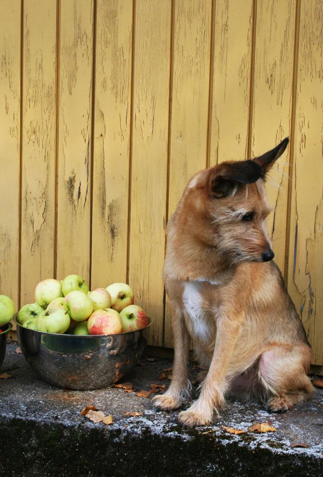 Omenapuilla25