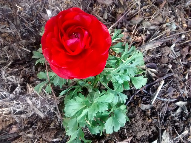 red flower bowral