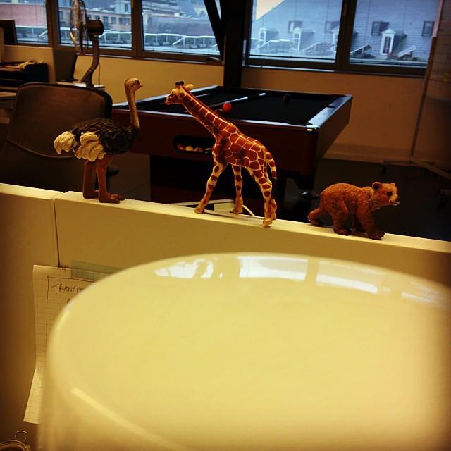 Wij kweken onze eigen dierentuin. #atwork