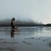 sunstar beach by laura zalenga