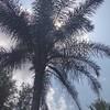 :heart:️:palm_tree::heart:️