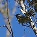 nopa-m-bocaciega-3-04-17-tl-2-cropscreen