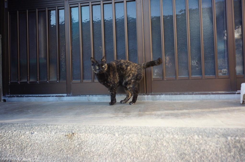 猫 x 4??