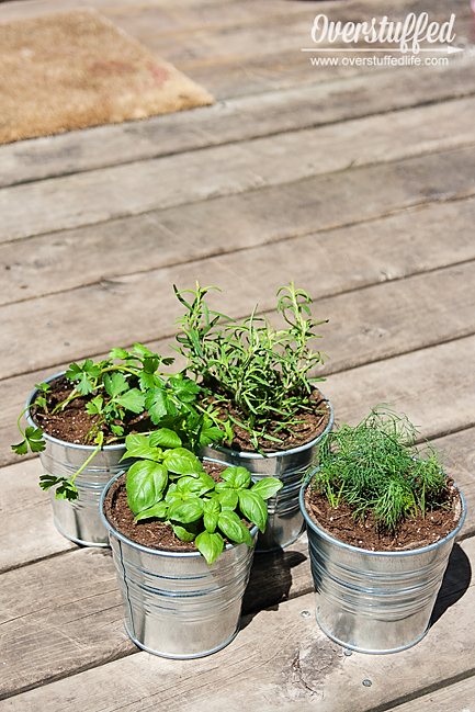 I used IKEA Socker galvanized buckets to pot the herbs for my patio herb garden