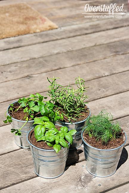 I used IKEA Socker galvanized buckets to pot the herbs for my patio herb garden