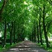 Small photo of Allee, Friedhof Tholenswehr, Emden