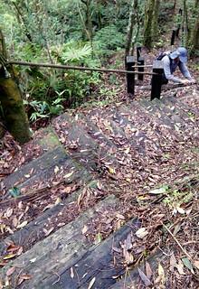 坪林區大尾山登山步道。(圖片來源:台灣千里步道協會)