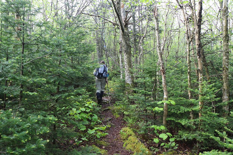 Hiking higher into the fir forest on the Seagar Trail as we near Big Indian Mountain