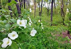 Central Park-Hallett Nature Sanctuary, 05.06.14
