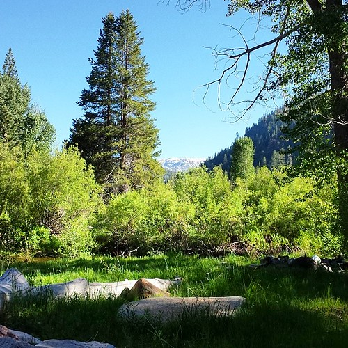 Tahoe valley #summer #tahoe #nature #woods