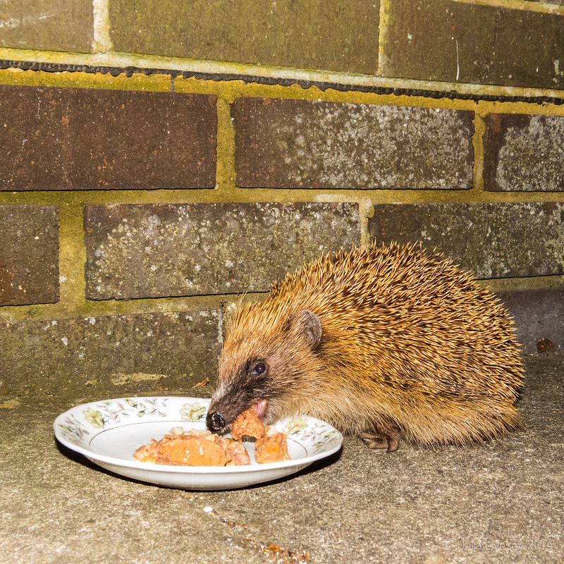 A Nightime visitor tucks into some of Jez's food