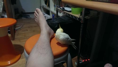 粉圓在我的腳邊睡著了