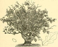 "Image from page 109 of ""Essex naturalist: being the journal of the Essex Field Club"" (1887)"