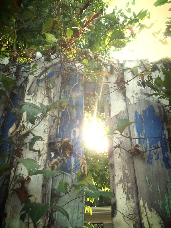 The light falling through a fence