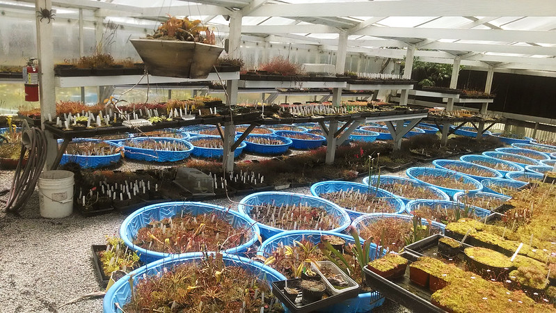 Propagation/growing area at California Carnivores.