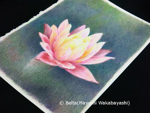 2014_07_05_lotus_05_s