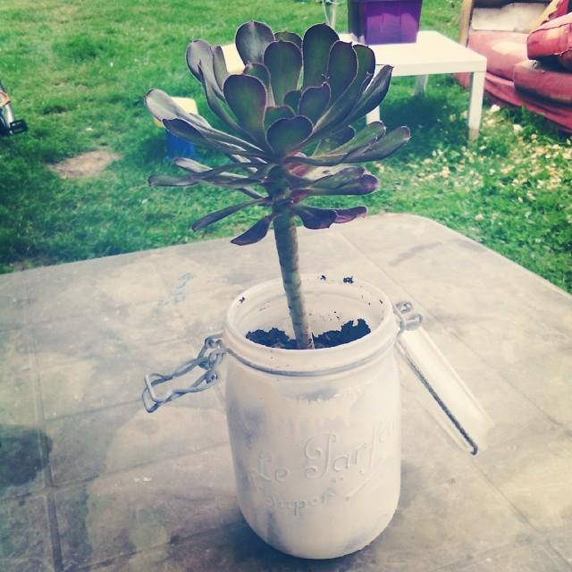 Chiné une plante grasse qui m'a fait penser à @frenchfanfan #leparfait