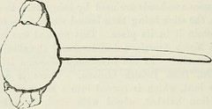 "Image from page 171 of ""The ancient stone implements, weapons, and ornaments, of Great Britain"" (1872)"