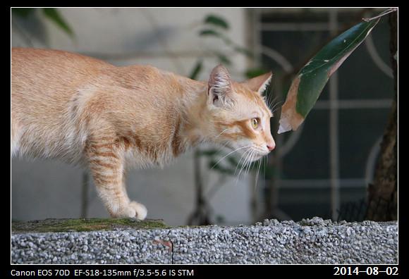20140802_Cat