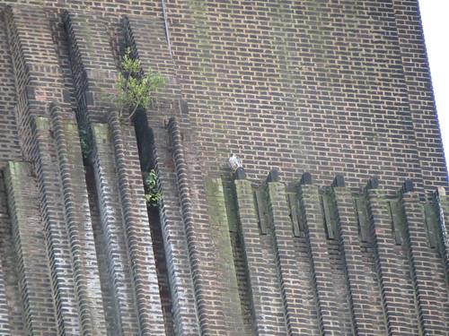 Tate Modern Resident
