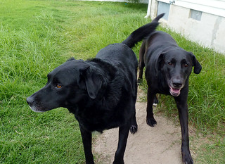 Auggie and Angus
