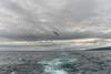 Kuril Islands - Harimkotan
