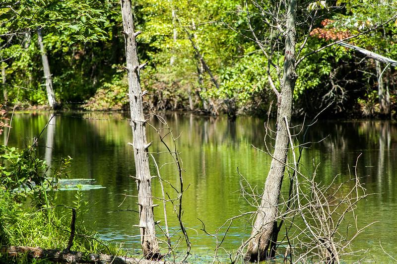 Greene-Sullivan State Forest - August 12, 2014