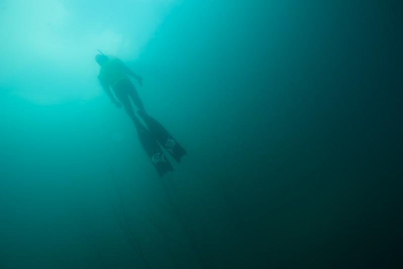 Rubrique plongée : venez comme vous êtes ! 14983901998_fffd4a136c_c