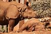 DSC_0278 Indian Rhinocerous