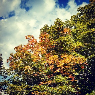 Screw this 80-90 degree crap... I SEE fall! #trees #clouds #sky #newengland #fall #foliage #newhampshire