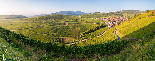 morning blue panorama france green sunrise village wine valley alsace grapes grape vosges goldenhour wineyards oldvillage alsacian niedermorschwihr