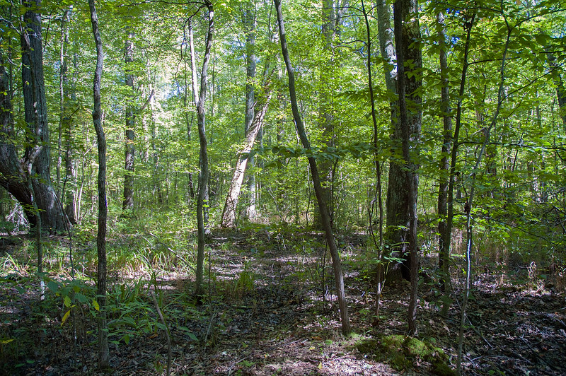 Chelsea Flatwoods Nature Preserve - September 7, 2014