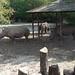 Nosorožci v ZOO Dvůr Králové, foto: Petr Nejedlý