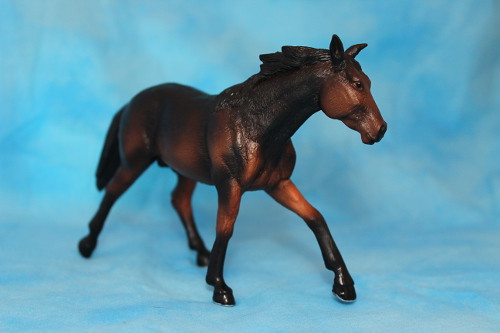 Walkaround of the Mojo Fun Sooty Bay Quarter Horse Stallion 15262894472_74b75ebe1c