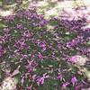Summertime lawn #summer #lawn #flowers #pattern #coronado