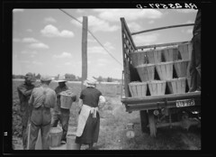 Loading Stringbeans for Packinghouse Near Cambridge: 1937