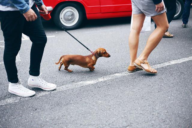 Cute Dog x2
